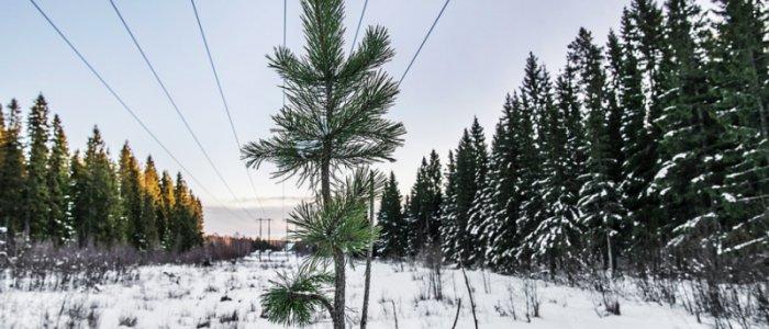 Satsar halv miljard i svensk batterifabrik